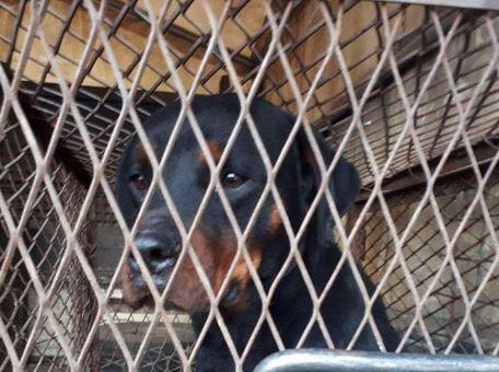 ФОТО – Ова е кучето што касаше деца, се бара сопственикот кој го оставил на улица