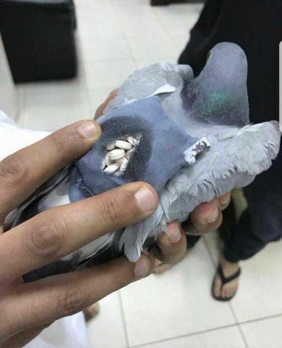 ФОТО: Гулаб пренесувал 200 таблети екстази, но слетал на погрешно место