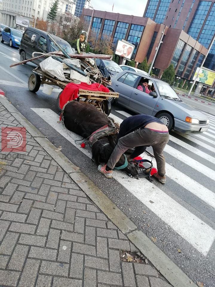 ФОТО : Коњ падна од изнемоштеност на семафорот кај Мавровка