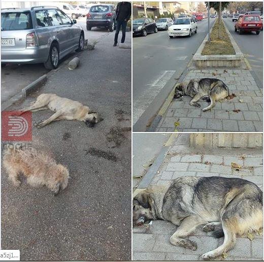 ФОТО: Отруени кучиња по улиците на Тетово