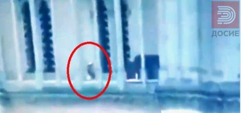 Твитер полуде: Кој е човекот што шета во Нотер Дам додека гори?