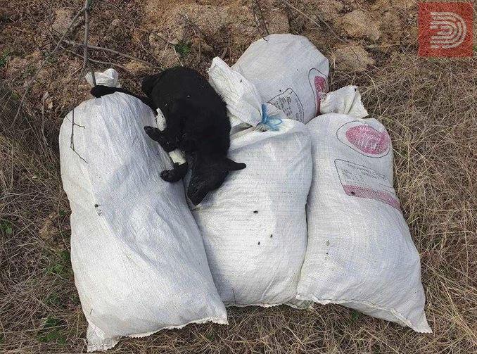 Вреќи со шест мртви кучиња пронајдени во Куманово