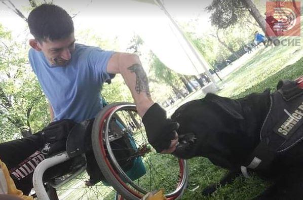 Александар во инвалидска количка и неговото куче водич биле спречени да влезат во автобус