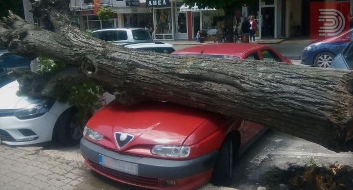 Липа падна врз автомобил на паркинг во центарот на Охрид