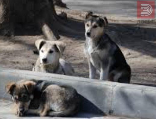 Аудио: Маж сакал да тепа куче, еве што им зборува на соседите