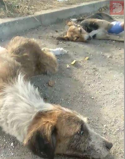 Видео: Кучиња плачат,се мачат , фрлен отров во населба Геге