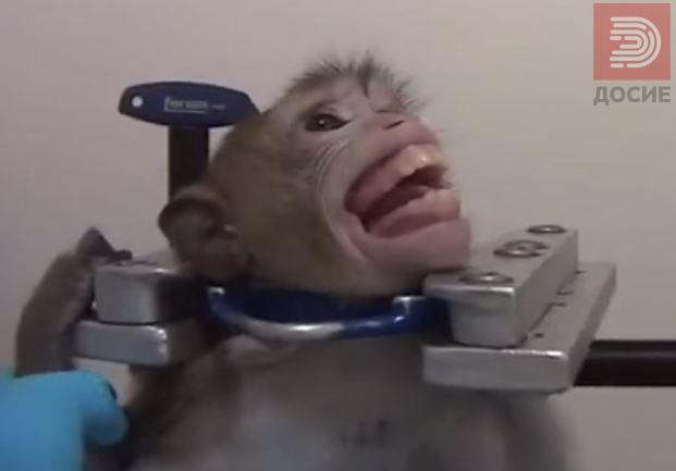 (ВИДЕО) Германија: Тајно снимено мачење на мајмуни, мачки и кучиња на кои се тестираат отрови