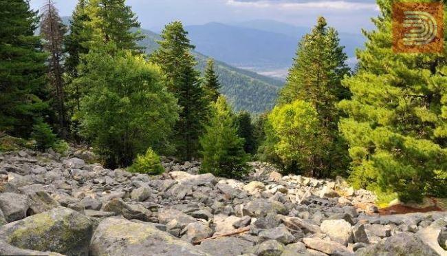 Планинарот кој падна од карпа на Пелистер е битолчанец