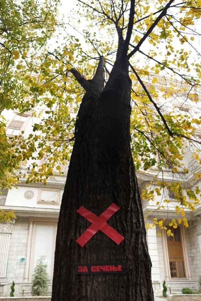 """Протест во Центар – """"НЕ"""" да се сечат дрва """"НЕ"""" да се проширува улица"""