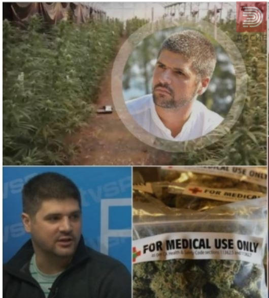 Молк во Македонија за српската истрага за партнерот за производство на марихуана за медицински потреби