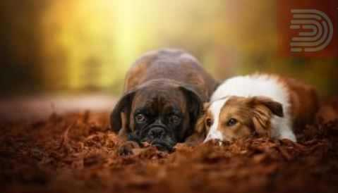 """ОДЛУКА НА УСТАВНИОТ СУД: Битолчани ќе може да чуваат повеќе од две кучиња и кучиња што """"постојано лаат и завиваат"""""""