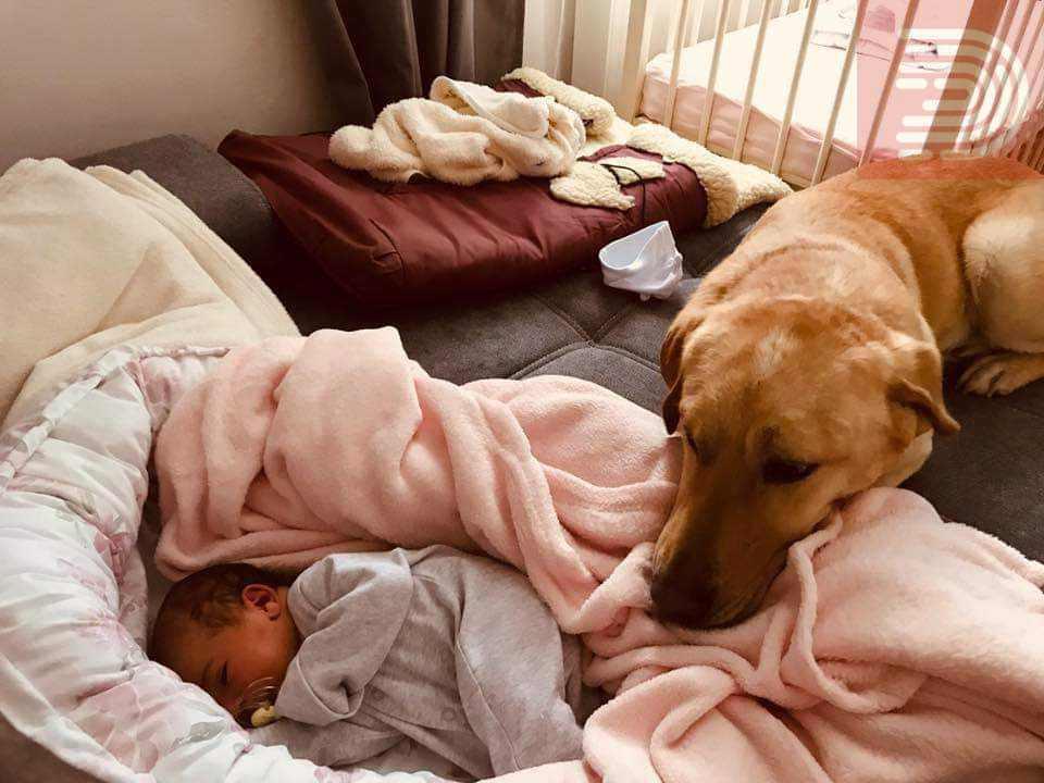 Бездомно куче од Охрид кое беше на умирање, живее нов живот