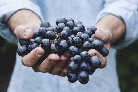 Тешки метали пронајдени во извезено грозје од Македонија