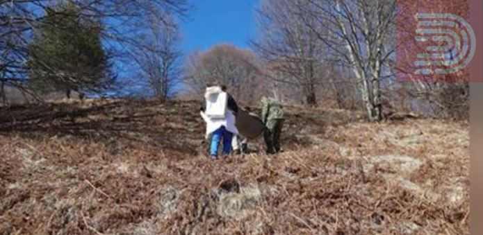 Почина овчарот кој беше завеан во Кратовските планини